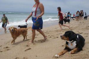 Interwencja policji na plaży dla psów, Torrevieja