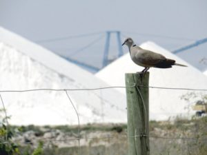Sól z posmakiem, Torrevieja